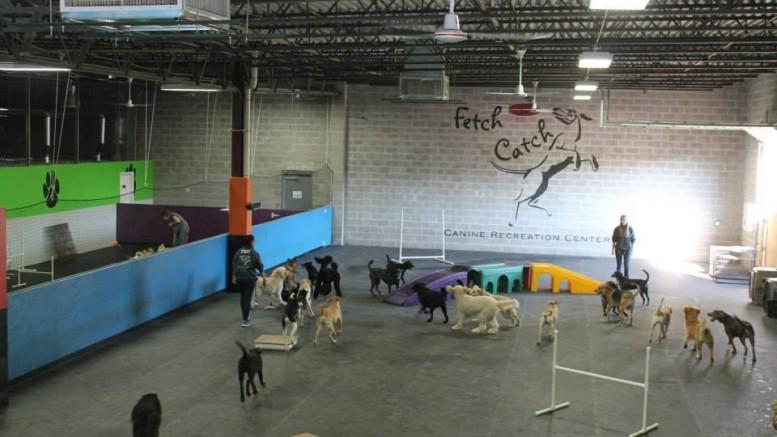 Fetch N Catch Wny S Premier Dog Daycare Center Buffalo Scoop