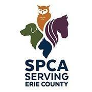 SPCA Serving Erie County offers free adoptions to current