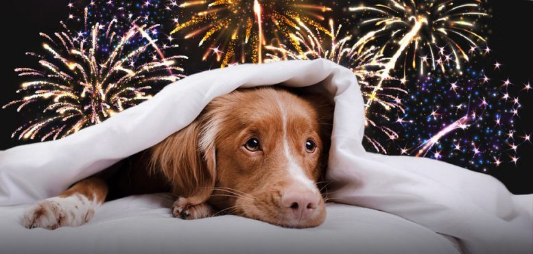 If your pet is upset by thunder, a door slamming or other loud noises, Fourth of July fireworks will be utterly terrifying.
