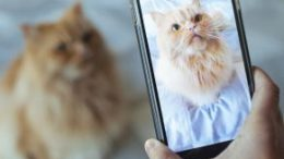 Getting your cat to look where you want him or her to may be easier than you think.