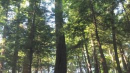 Mossy Point is prized for its diversity of plants and animals, including a patch of rare old growth forest.
