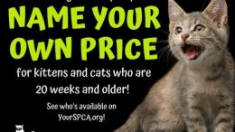 The adoption special will run through Friday, Sept. 6.
