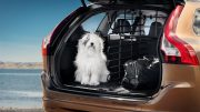 What can you do to keep your pet safer while driving?
