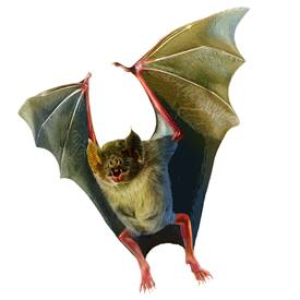 Vampire bats and birds, live leeches and lampreys, and more of nature's most bloodthirsty animals star in this ROM-original exhibition.