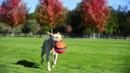 Spending time playing with your dog is fun and a terrific stress-reliever for both of you!