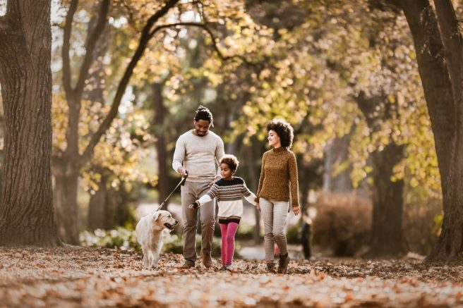 Autumn is a great time to get out of the house and enjoy the outdoors in the company of your favorite four-legged friend.