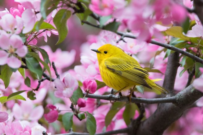 Native plant species provide birds with food and places to rest and nest.