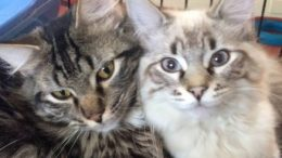 Catology will launch as a series of free, interactive livestreams, covering the most important kitten topics.