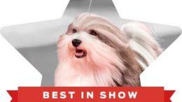 2019 Best In Show winner.