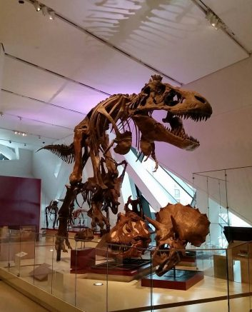 The first phase of the museum's reopening offers visitors the opportunity to explore the ROM's permanent collection and 40 spacious galleries.