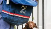 The Postal Service places the safety of its employees as a top priority.