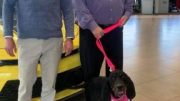 Pictured is Mona the shelter dog on her trip to Basil Family Dealerships.