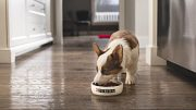 What should you be feeding your puppy?