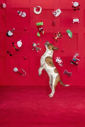 PetSmart is celebrating the Season of Spoiling this year with gifts ranging from tasty treats and cozy beds to even a few gift ideas that pet parents will enjoy as well.