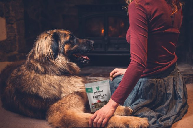 The holiday season is all about showing loved ones you care. This year, make sure that also includes furry friends. © LoloStock/Adobe Stock + Pet Releaf.