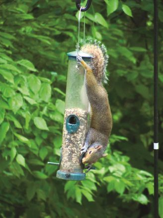 Yes, squirrels are a problem at bird feeders.