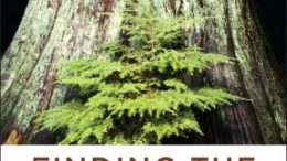 The Western New York Land Conservancy is thrilled to host Dr. Suzanne Simard, author of the memoir Finding the Mother Tree, for a livestreamed virtual event on June 16.