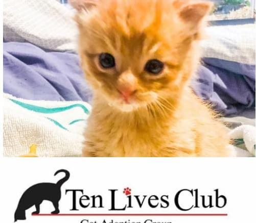 The grant is part of the Save the Cats Project and will allow the rescue to purchase a new feline serenity suite, a flat-top surgery table and an autoclave.